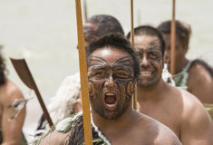 Maori warrior at a Haka in New Zealand Royalty Free Stock Images