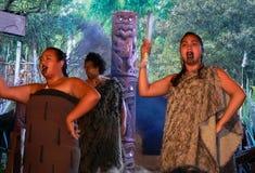 Maorikapacitet, Rotorua, Nya Zeeland royaltyfri fotografi