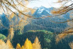 Maountain autumn landscape Stock Photos