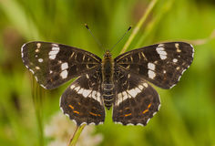 A map butterfly royalty free stock photography