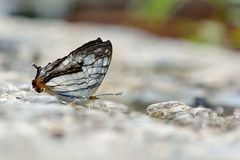 Map butterfly in water Royalty Free Stock Images