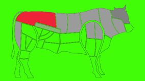 map of cow body parts anatomy for cuisine purposes on a green screen