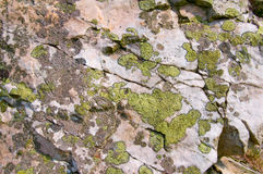 Map lichen Stock Photography