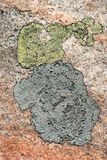 Map lichen, Rhizocarpon geographicum. Crustose lichens (Rhizocarpon geographicum) growing on a granite rock royalty free stock photography