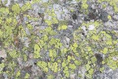 Map lichen. (Rhizocarpon geographicum species) background. Lichen growing on quartzite rock royalty free stock photos