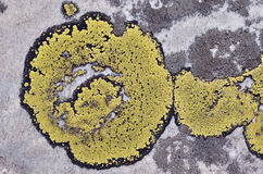 Map lichen on rock Royalty Free Stock Photos