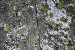 Map lichen on the rock Royalty Free Stock Images