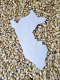 Map of the territory of Peru in white and background with grains of corn. Yellow edible seed, agriculture and harvest, world cereal production, ingredient for stock images