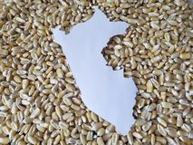 Map of the territory of Peru in white and background with grains of corn. Yellow edible seed, agriculture and harvest, world cereal production, ingredient for royalty free stock photo