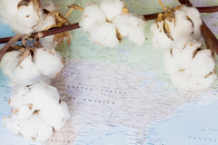 Map of United States of America with white cotton flowers Royalty Free Stock Image