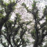Mapa da árvore Fotografia de Stock Royalty Free