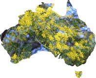 Mapa de Australia con el árbol del zarzo en flor imagen de archivo