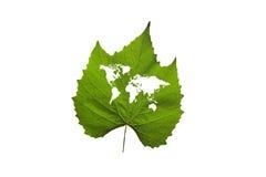 Mapa del mundo en una hoja verde Imágenes de archivo libres de regalías