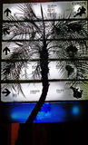 Mapa i drzewko palmowe w nocy Zdjęcia Royalty Free