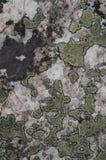 Mapa liszaju Rhizocarpon geographicum na skale obraz royalty free