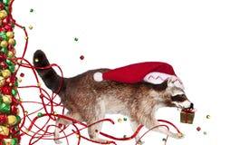 Mapache de la Navidad Imagen de archivo