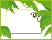 Mapache del marco de escritura de la etiqueta Imagen de archivo libre de regalías