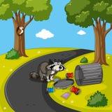 Mapache que busca basura en parque libre illustration