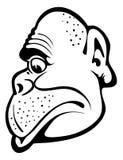 małpi portret Fotografia Royalty Free