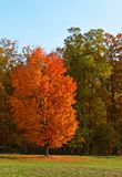 Maple. Greenbrier State Park. Maryland stock photos