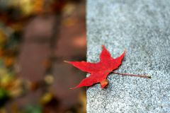 The maple. Lying on the stone bench in a autumn morning Royalty Free Stock Photography