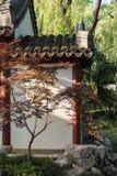 Maple(Acer palmatum Thunb) tree Stock Images