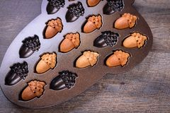 Maple Acorn Cakelets, acorn shape cookies in a baking pan, mold. Closeup. Maple Acorn Cakelets, acorn shape cookies in a baking pan, mold Stock Image