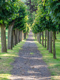 Maple alley in a park in germany Royalty Free Stock Images