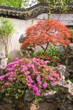 Maple And Azalea In The Yu Yuan Royalty Free Stock Images