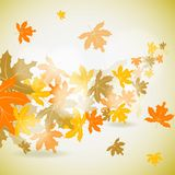 Maple autumn background Stock Photo