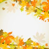 Maple autumn background, vector Stock Photos