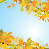 Maple autumn background, vector Stock Images