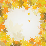Maple autumn background, vector Royalty Free Stock Images