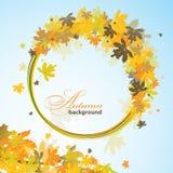 Maple autumn background, vector Royalty Free Stock Photos