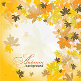 Maple autumn background, vector Royalty Free Stock Image