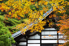 Maple. Autumn color in Japan,colorful maple Royalty Free Stock Photography