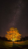 Maple. Autumn colors at night under the stars and Milky Way Royalty Free Stock Photos