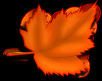 Maple, Autumn, Fall, Leaf, Orange Stock Photos