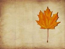 Maple autumn leaf Stock Images