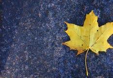Maple autumn leaf on a granite slab Stock Photos