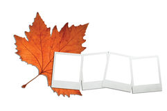 Maple autumn leaf and instant photo prints Royalty Free Stock Photo