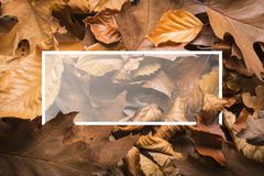 Maple autumn leaves foliage top view of creative layout made out. Of wild oak forest leave Stock Photography