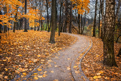 Maple autumn. Path in a park covered with fallen maple leaves Royalty Free Stock Images