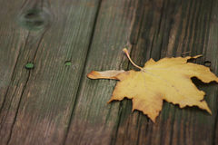 Maple autumn sheet on old boards. Removed close up Royalty Free Stock Image