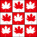 Maple Background Royalty Free Stock Image