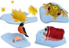Maple bird tin frog Stock Images