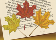 Maple book. Three maple leaves lying on a book page Royalty Free Stock Image