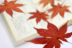 Maple bookmark Stock Image