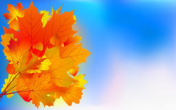 Maple bouquet against sky, autumn. Royalty Free Stock Photo