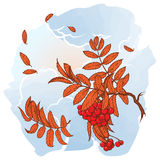 Maple branch. Sketch on watercolor background Royalty Free Stock Photo